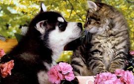 site de rencontres pour animaux